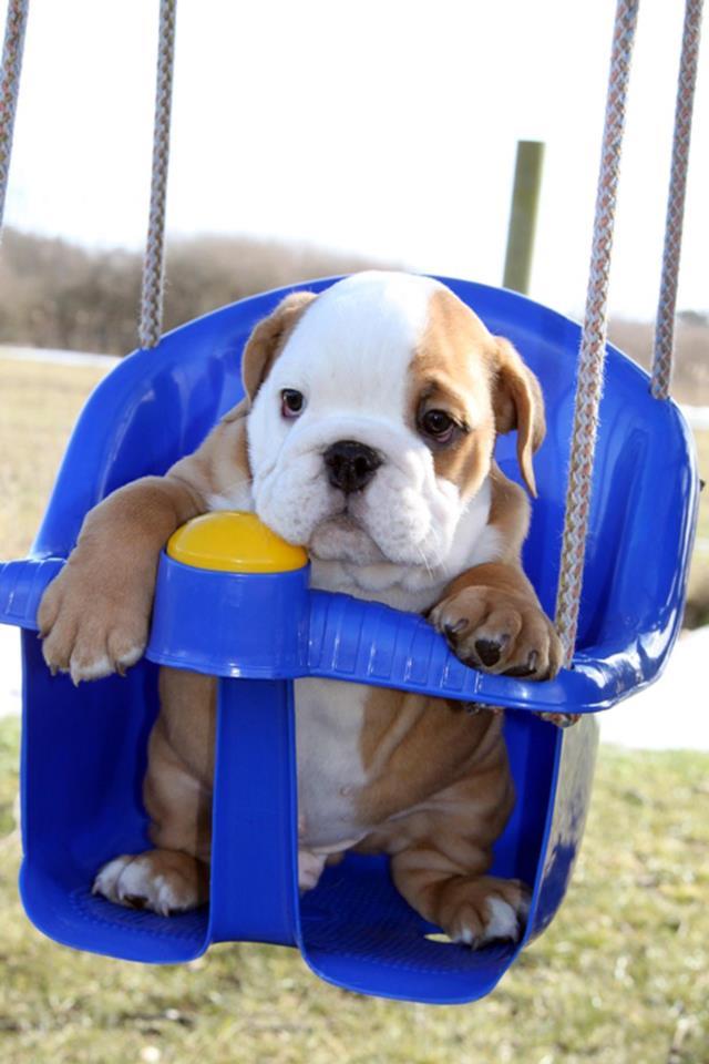 Cute puppy pictures (30 pics) | Amazing Creatures