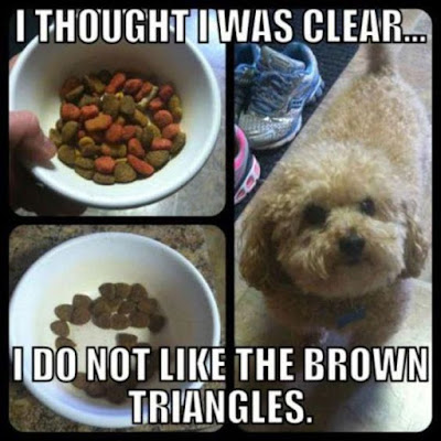 Funny Dog Shaming : I thought i was clear