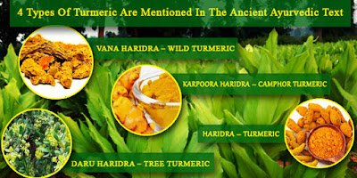 Turmeric-Called-Indian-Golden-Spices