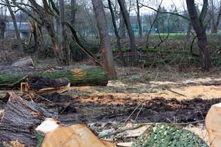 Bischleben Baumfällungen Sportplatz