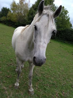 Ed Hill Metal Art - horse