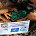 Βρήκαν ευκαιρία με την καραντίνα και σκορπούν θάνατο ...Ψάρια και κοτόπουλα με δηλητήριο σε Σερβιανά και Δίστρατο...