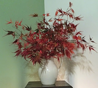 Japanese Maple 'Red Dragon' in Vase