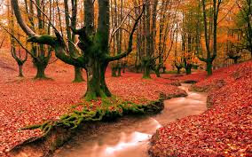 world best forest  hd wallpaper download1