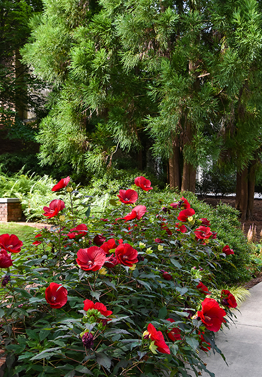 Atlanta History Center | Entrance Gardens | Photo: Travis Swann Taylor