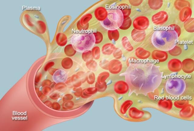 Anatomi dan Fisiologi Darah