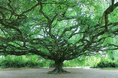 arbre ouvert