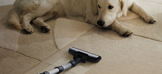 How Can You Keep Carpet Clean and Fresh from Pets?