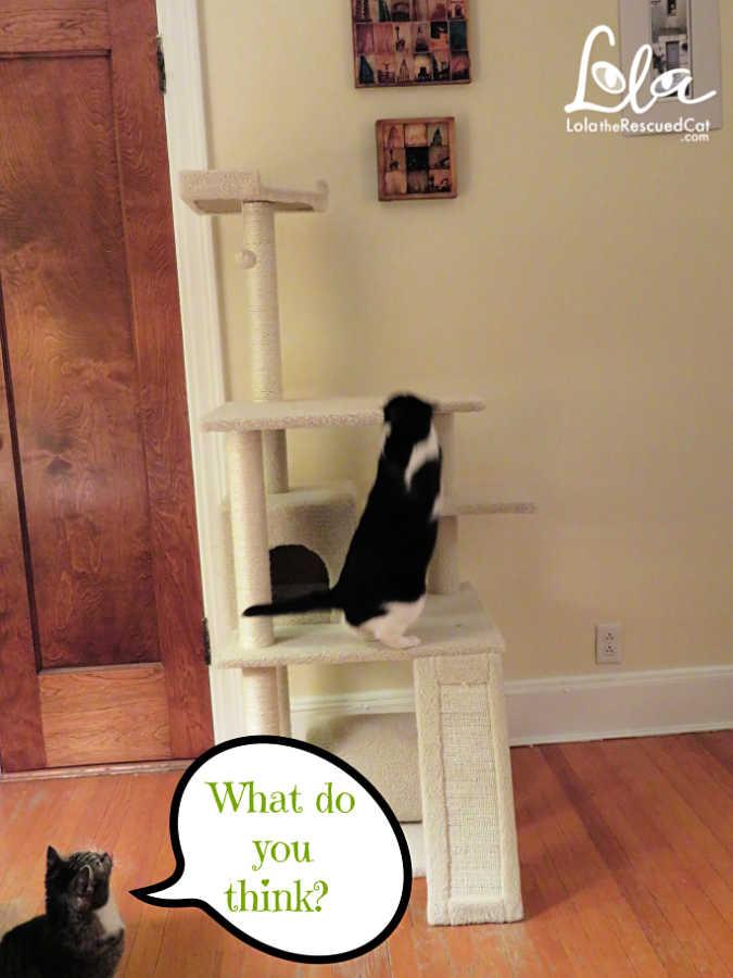 Frisco Cat Tower|Chewy.com