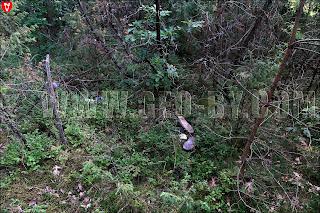 Окрестности польской стражницы 'Луговатое'. Брошенная обувь