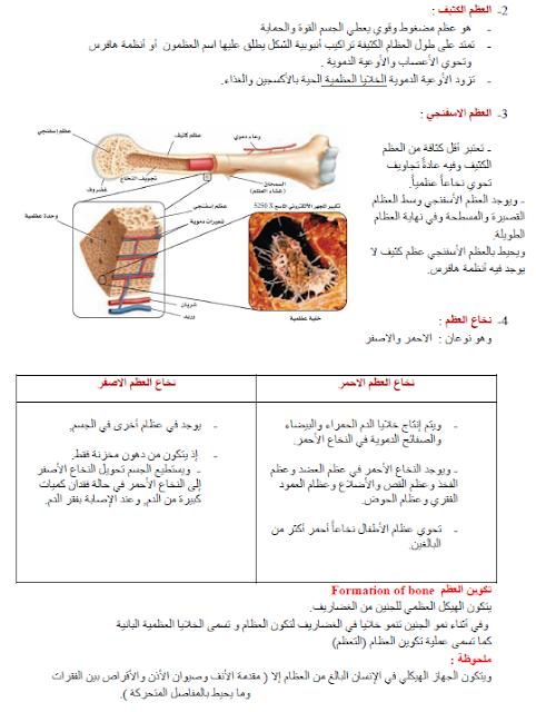 ملخص الجهاز الهيكلي أحياء