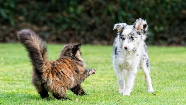 Hostility between dogs and cats