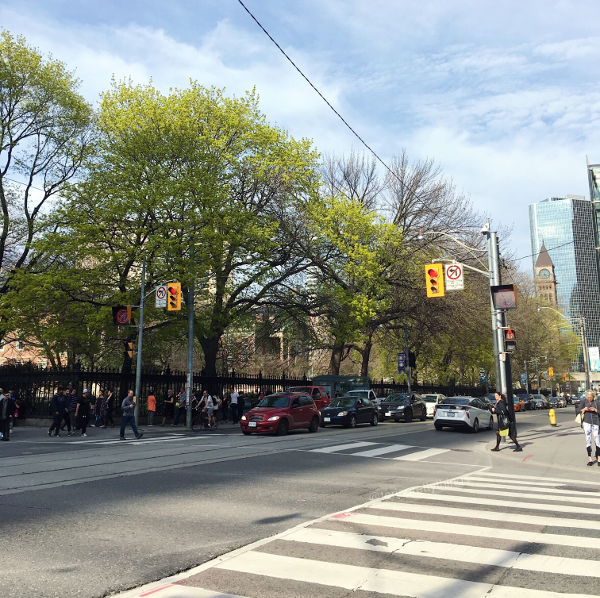 Spring Trees outside of Osgoode Hall – Queen St W, Toronto  - Tori's Pretty Things Blog