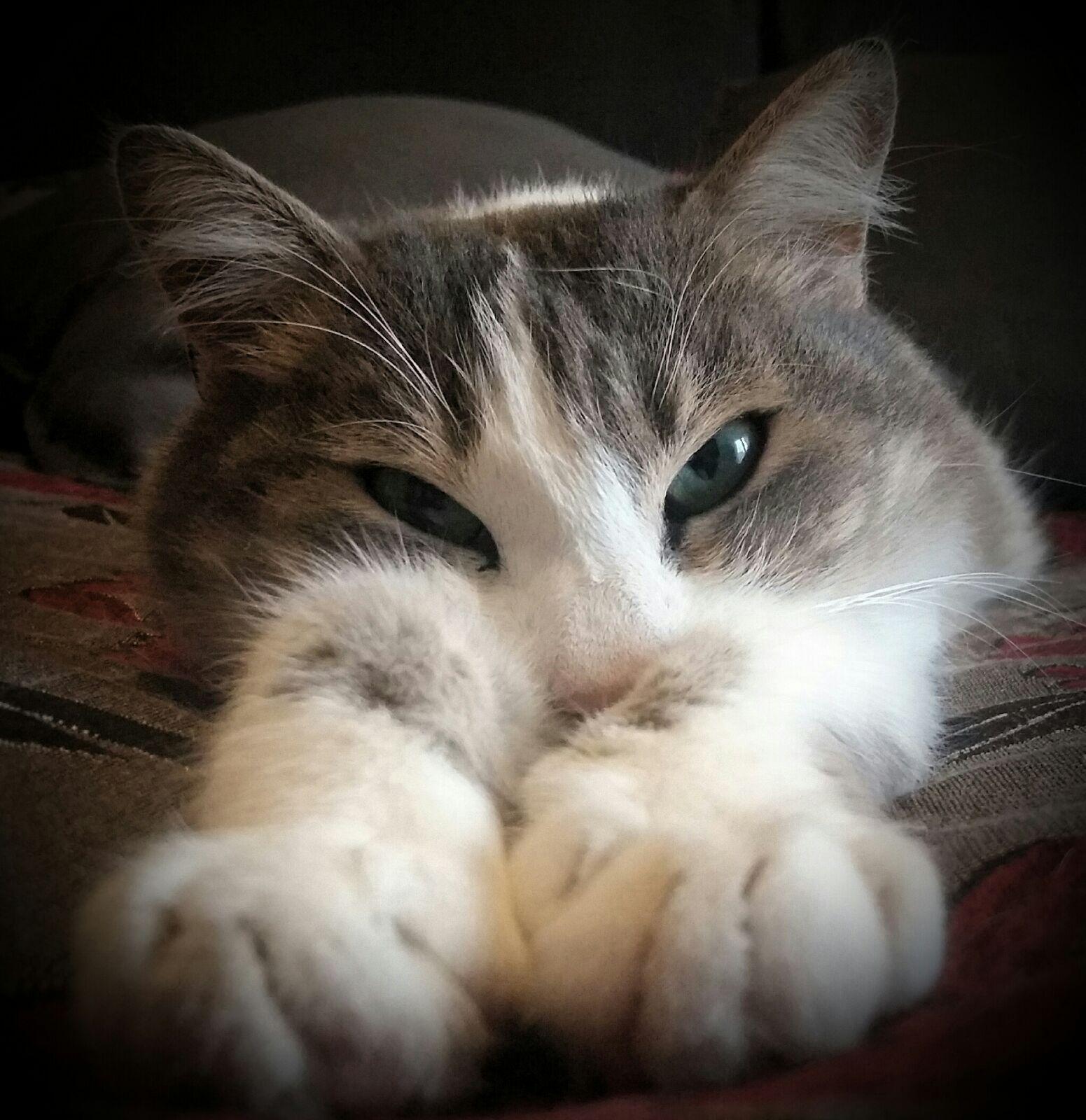 perdita di peso e minzione frequente nei gatti