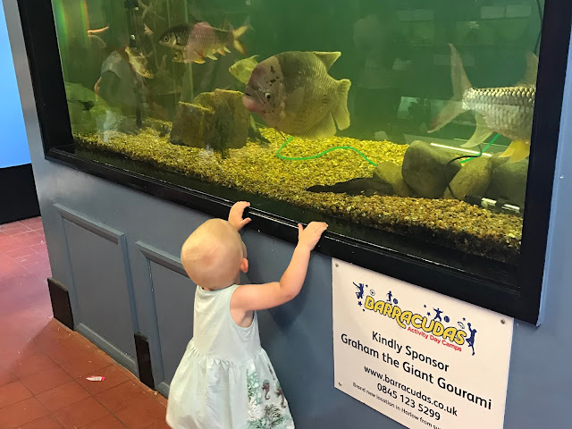A toddler looking in a fish tank at Pet's Corner Harlow