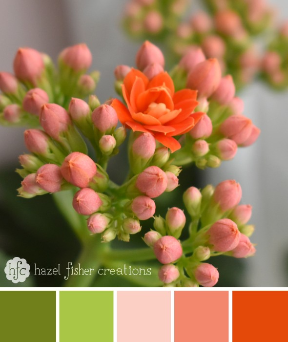 Colour Palette Inspiration, Kalanchoe peach flower photography by hazelfishercreations