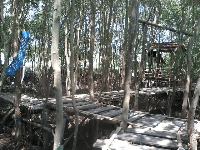 Jembatan Api Api Objek Wisata Hutan Mangrove Kulon Progo