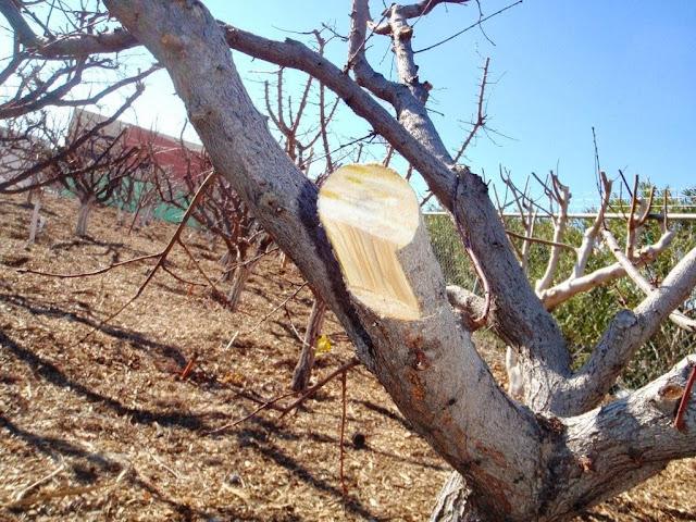 Tree Limb Cutting Tools