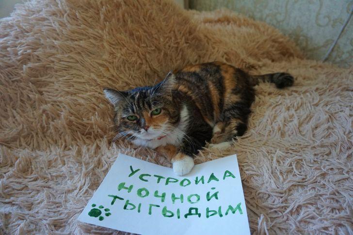 ТОП-10 Смешных Котов Которые Признаются В Своих Пакостях
