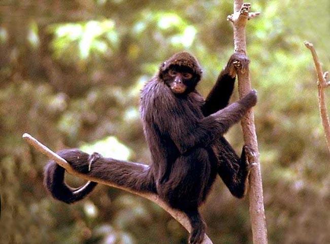 Animales En Peligro De Extinción.: Junio 2012