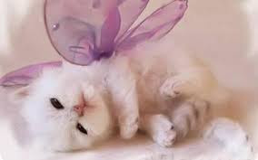 New Baby Cats Animal Hd Wallpaper25