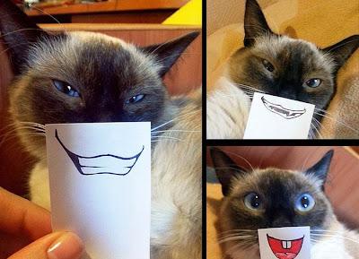gato-con-estilo
