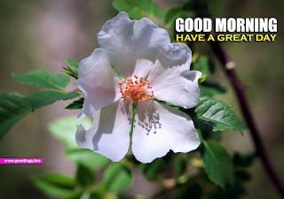 good morning English text white flower