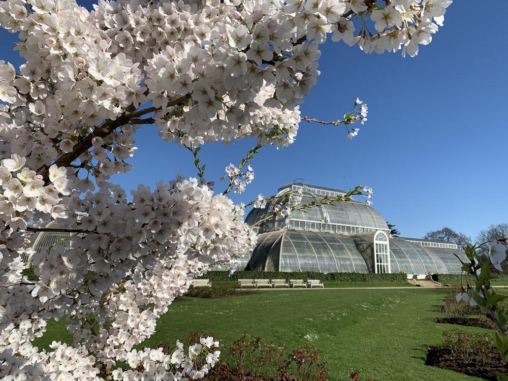 imágenes jardines de Kew (Kew Gardens)