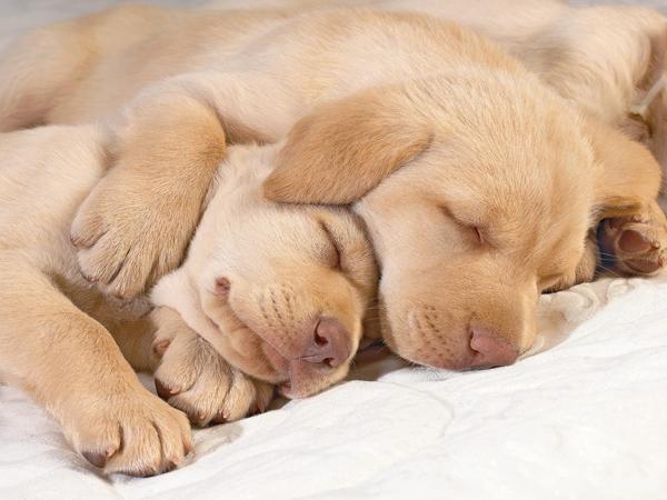 fotos tiernas perros durmiendo abrazados