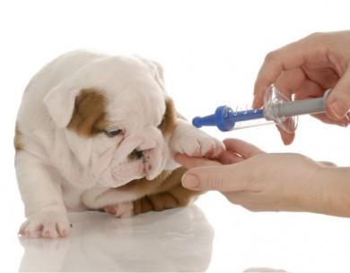 Phòng và điều trị ở chó