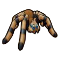 Tarantula - Pirate101 Hybrid Pet Guide