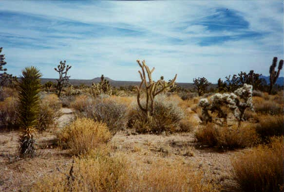 Print To Pixel The Mojave Desert