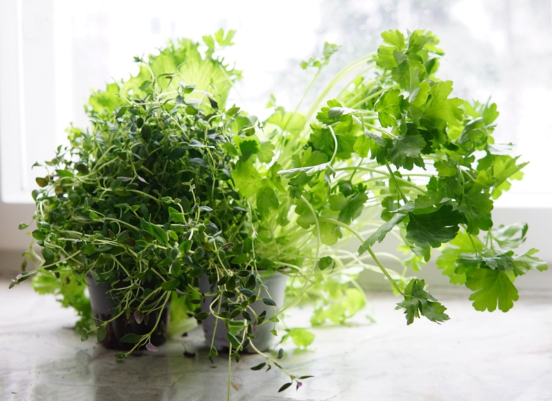 biohajoava_pakkaus, ympäristöystävällinen