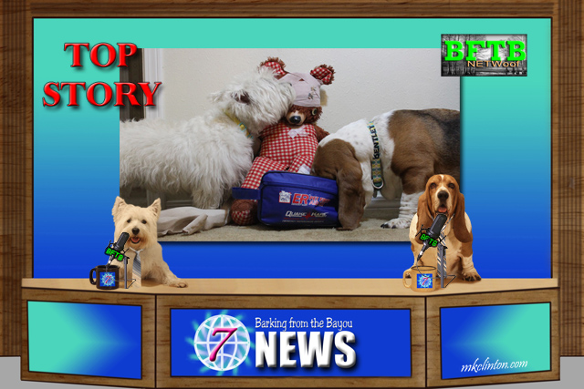 BFTB NETWoof Dog News television set