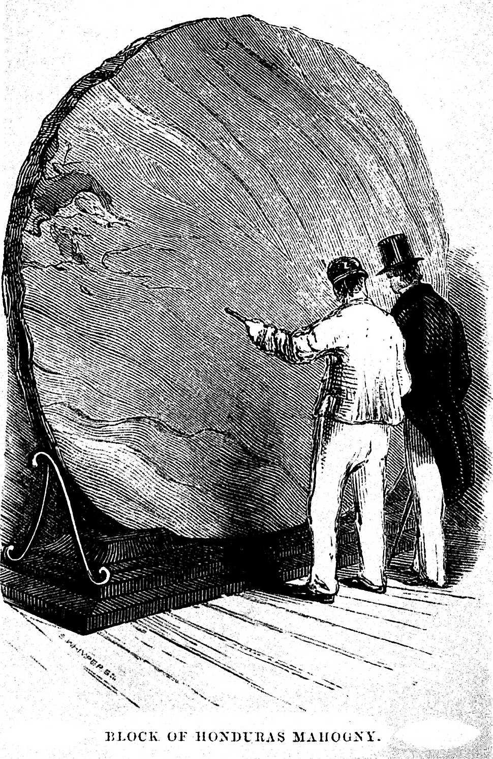 Block of Honduras Mahogany at the 1851 London Exhibition, an illustration