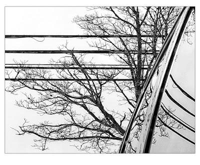 Lines by Sara Harley