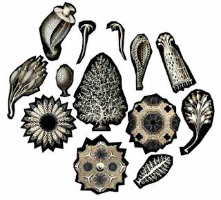 Klasifikasi porifera dan peranan porifera