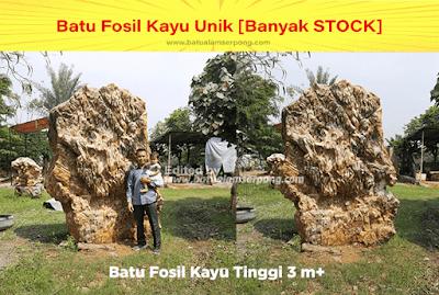 batu fosil termahal diindonesia