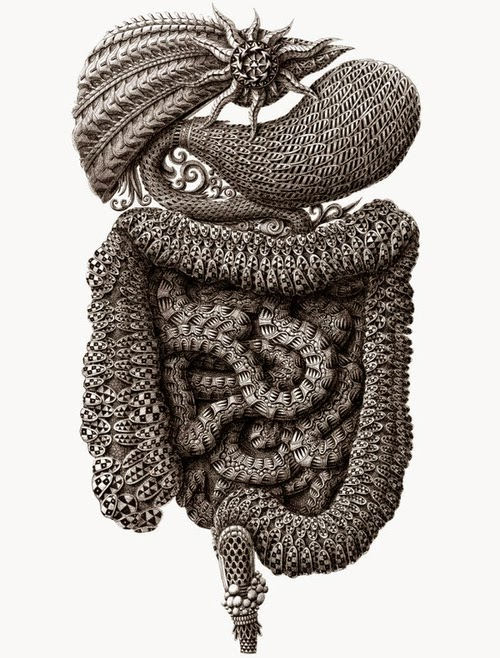 05-The-Digestive-System-Alex-Konahin-Stylised-Anatomy-Intricate-and-Unique-Drawings-www-designstack-co