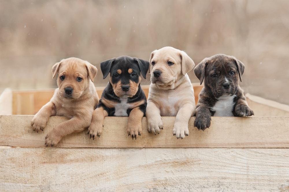 Weaning Puppies Is Just All-natural