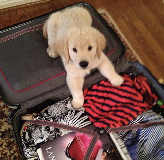Golden Retrievers Suitcase