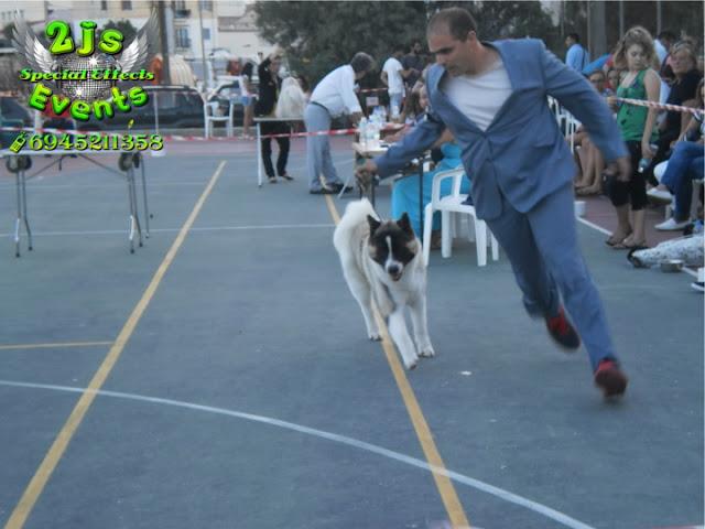 ΕΚΘΕΣΗ ΜΟΡΦΟΛΟΓΙΑΣ ΣΚΥΛΩΝ ΣΥΡΟΣ DJ ΗΧΟΛΗΨΙΑ SYROS2JS EVENTS