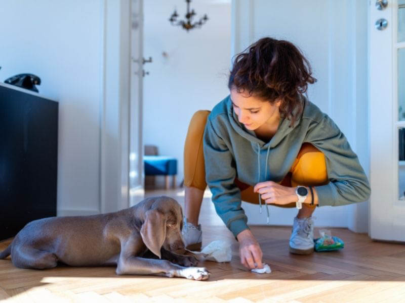 Five common mistakes dog owners make First-Time