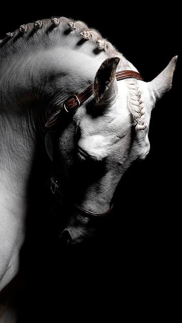 خلفية هاتف حصان جميله بخلفيه سوداء