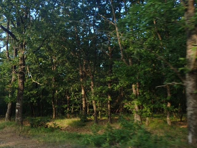 Strandża jest porośnięta lasem