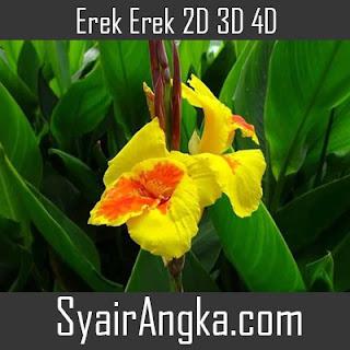 Erek Erek Bunga Kana 2D 3D 4D