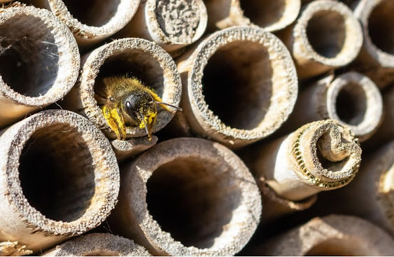How to Use Mason Bees to Increase Fruit Crop Yields