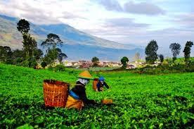 Perusahaan agraris