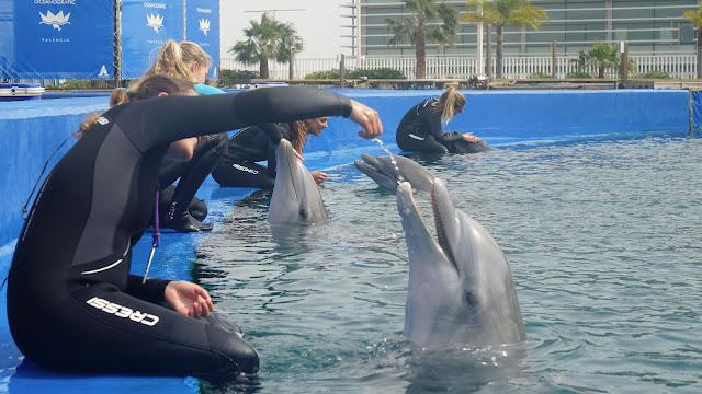 Sesión de vínculo afecivo esta mañana con los delfines.
