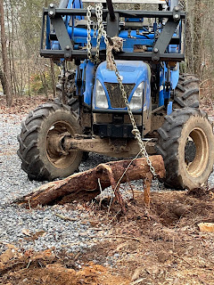 A tractor pulls up a large tree root.